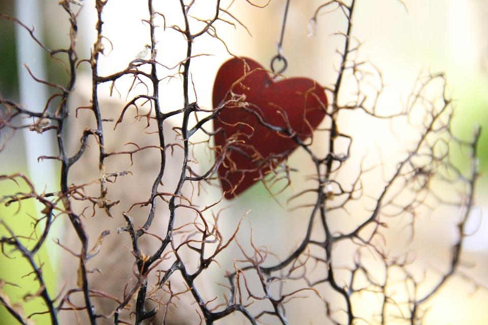 Herz hinter BaumNovember